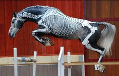 """At the """"Horse Trust"""" in Buckinghamshire, England…horse body painting is both an educational demonstration and a competition…to raise money for charity…the body of a horse is painted on one side to show where major organs, muscles and bones are located.  When a body painted horse jumps…the bone structure of the horse…moves in proper order.    Wall Photo of Atcilik"""