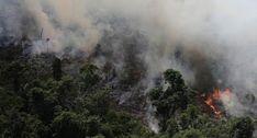 Pregopontocom Tudo: Privatização atinge Floresta Amazônica