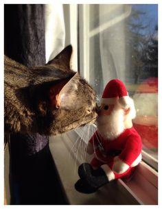 Santa, I've been a GOOD kitty
