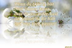 dreamies.de (ifvywczp1w2.jpg)
