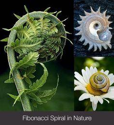 Golden Spirals in Nature