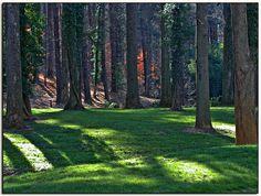 Biltmore Estate Forest - Asheville, North Carolina