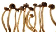 Beech mushrooms, Food, Food Photography, Ingredients, Food Close-ups