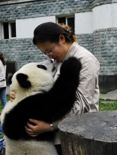 Chen Yu shares a moment with a panda at the Bifengxia Reserve in China. Tell us if you catch the pandas interacting with the reserve's scientists on our Panda Live Camera.