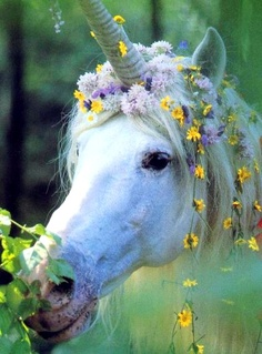 Unicorn Wedding horse Flower Crown Toni Kami ❀Flowers in their coats❀ Mystic