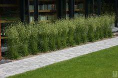 Trawy rabatowe w ogrodach - Obraz Zieleni