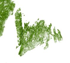 Forests of Newfoundland