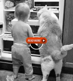 this is an amazing cat Cute Baby Videos, Cute Animal Videos, Funny Animal Pictures, Cute Baby Animals, Animals And Pets, Funny Animals, Cute Cats, Funny Cats, Cute Funny Babies