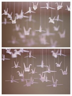 Flying cranes - Beautiful and so intriguing!!