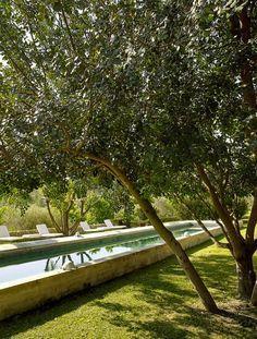 56 Ideas For Olive Tree Design Swimming Pools Erhabener Pool, Swimming Pools Backyard, Swimming Pool Designs, Garden Trees, Garden Bridge, Raised Pools, Landscape Design, Garden Design, Baumgarten