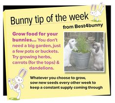 Bunny tip week 6 - Grow food for your bunnies...