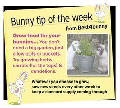 Bunny tip week 6 - Grow food for your bunnies...