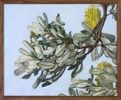 Banksia Integrifolia by Judith Sinnamon Botanical Art, Botanical Illustration, Still Life Flowers, Flower Artwork, Artist Sketchbook, Mosaic Projects, China Painting, Australian Art, Cool Art