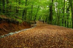 Belgrad ormanı gizli hazine