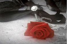 A rose with a ring...He never forget her...