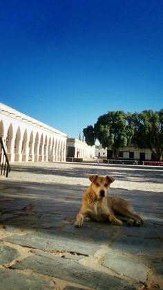 En la plaza un perro callejero tomando un descanso Cachi - Salta - Marzo/16