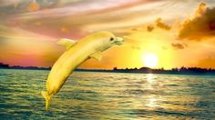 Banana dolphins are the most graceful of all the dolphins. 19¢/lb bananas are the most delicious of all bananas. And they happen every Banana Thursday at Checkers.