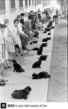 Cat audition for Sabrina the Teenage Witch for the role of Salem