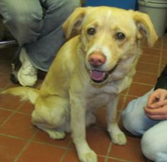TRAPPER...FOUND IN STARK COUNTY...OHIO....Picked up as a stray on 3/22. Available on 3/27.  $ 86.00 fee includes OH license, DA2PP, Bordetella vaccine, Hw testing, Worming and spay/neuter.  Flea treatment will be provided if fleas are noticed.  All dogs will be spayed/neutered before...