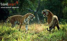Good news for wildlife enthusiasts: Rajasthan to become a major wildlife destination #ToursAndTravelsIndia