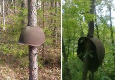After all our wars, nature wins — Trees growing through and around old guns, helmets, and more...