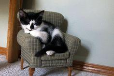 クイック! 今、それはあなたが上司である猫を表示できるように椅子を傷つけるためにあなたの番です。