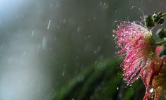 Με βροχές η περιφορά του Επιταφίου
