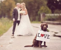 Cute, Lovely and Sweet dogs in Weddings. Must see!