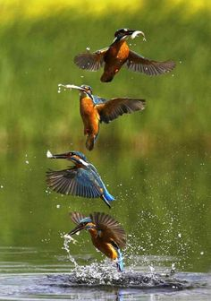 Action Sequence Photography