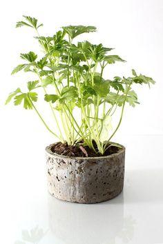potted plant DIY wedding favors