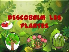 Funcions de les plantes