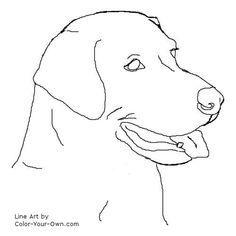 Labrador Retriever Headstudy Line Art