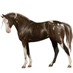 Дэилфай. Шоколад, Pferd Curly Horse Dunkelfuch - Howrse