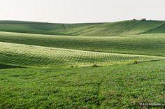 Salvatore Clemente: Fotografie: Sicilian green