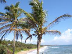Palm View Signs Of Life, Sri Lanka, Palm, Beach, Water, Outdoor, Inspiration, Beautiful, Gripe Water