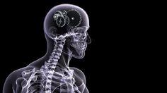 Brain skeletons digital art x-ray black background wallpaper