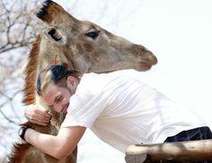 Jeff Hardy hugging a giraffe. This melts my heart! :) <3