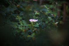 #Hydrangea #Photography #Flower