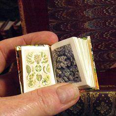 Miniature book illustrations of Ernst Haeckel