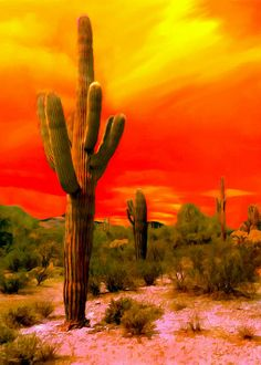 @GrandCanyonPics. #Digital #Painting of a #Sunset in #SaguaroNPS #NationalPark #Arizona. Saguaro's are listed in the #NationalForests of Arizona, many of them growing to a height of over 50 feet. #SaguaroNationalPark, located in southern Arizona, and a park of the #UnitedStates #NPS The park is divided into two sections, approximately 20 miles east and 15 miles west of the center of the city of Tucson, Arizona. The total area of 91,442 acres, 70,905 acres is a #wildernessarea.