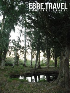 #ElsUllalsdeBaltasar in #LesTerresdeLEbre, enormous eucalyptus sorrounding the calm waters. At http://www.ebre.travel/ soon.  #ElsUllalsdeBaltasar a #LesTerresdeLEbre, eucaliptus enormes envoltant les aigües tranquil·les. Properament a http://www.ebre.travel/  #ElsUllalsdeBaltasar en #LesTerresdeLEbre, eucaliptus enormes rodeando las aguas tranquilas. Próximamente en http://www.ebre.travel/
