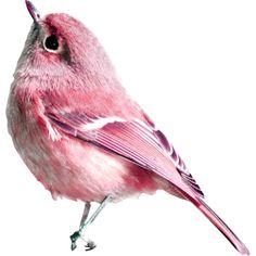 скрап_клипарт — «Le Petit Scrap…» на Яндекс.Фотках ❤ liked on Polyvore featuring birds, animals e filler