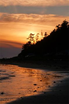 Coastal sunset @ Netarts, Oregon. My tribute photograph to the Oregon State Tree.