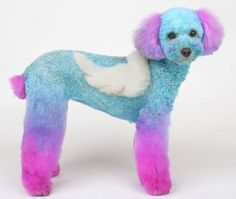 Little angel! Dog Grooming Styles, Grooming Shop, Poodle Grooming, Cat Grooming, Dog Hair Dye, Creative Grooming, Pet Boutique, Dog Bows, Fuzz
