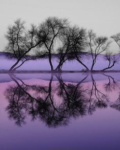 Tree Silhouette and Reflection Orchid hues Color of the year #radiantorchid #coloroftheyear