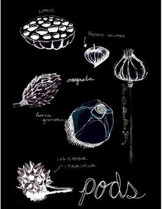 Black Background Botanical Prints | Dark Drama: Beautiful Black Background Art Prints
