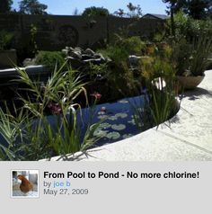 1000 images about pool to pond on pinterest ponds for Swimming pool koi pond conversion