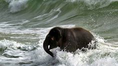 The baby elephant who spent a day at the beach and had the time of her life. | The 50 Cutest Things That Ever Happened