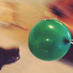 Shadow The Black Labrador.  Chasing balloon.