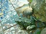 Image detail for -stone frog and mosaics on the sidewalk near Ashby House.